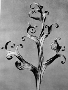 """miss-mary-quite-contrary: """" Karl Blossfeldt. Delphinium Karl Blossfeldt was a German instructor of sculpture who used his remarkable photographs of plant studies to educate his students. Karl Blossfeldt, Botanical Illustration, Botanical Art, Illustration Art, Spirals In Nature, Natural Form Art, Socialist Realism, Land Art, Expositions"""