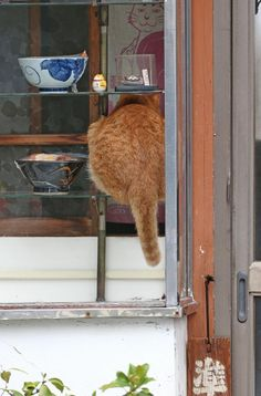 「そろそろ戻るかニャ…」そば屋「やぶ」の休憩時間に、ショーケースの中で過ごした看板猫のピンク=荒川区町屋(尾崎修二撮影)