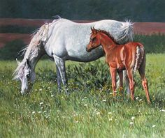Arabian Mare and Foal Limited Edition Print by Equestrian Artist Judi Kent Pyrah
