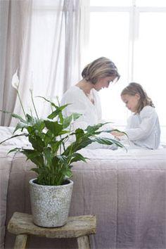 https://i.pinimg.com/236x/c9/4a/8a/c94a8a08dbc594017ef3d1262e914602--houseplants-indoor-plants.jpg