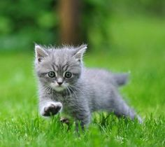 . I Love Cats, Spring, Summer, Animals, Summer Time, Animales, Animaux, Animal, Animais