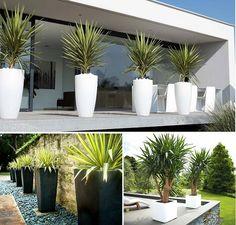 Backyard Gazebo, Backyard Garden Design, Home Landscaping, Front Yard Landscaping, Outdoor Planters, Outdoor Gardens, Yucca, Modern Front Yard, Contemporary Planters