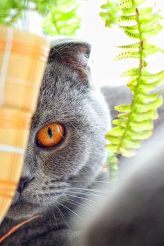 grey kitty still watchin u