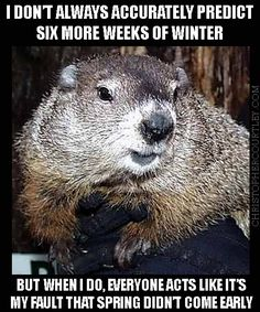c94adddf402ae18d74e814af46f2bbe6 weather memes prairie dogs 10 cutest groundhog pictures groundhog pictures, animal and squirrel,Funny Groundhog Meme