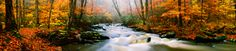 Fall On Watahootchie River, West Virginia Mural - Steve Mohlenkamp| Murals Your Way