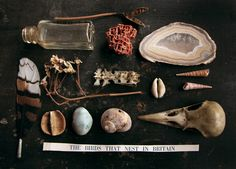The naturalist - photograph - still life arrangement - curated collection of related objects, arranged in a grid and shot from above. Elf Rogue, Cabinet Of Curiosities, Nature Collection, Nature Journal, Still Life Photography, Natural History, Oeuvre D'art, Display, Decoration