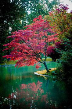 Acer aka Japanese maple ( 2 for one, as its reflection multiplies its awesome beauty !! )