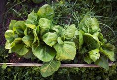 17 géniuszi kertésztrükk egy tenyérnyi zöldért