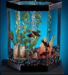 FENG~SHUI IDEAS.....aqarium