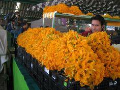 Flor de Calabaza - Squash Blossoms