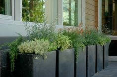 Fresh herbs in planters... great idea for our backyard garden.