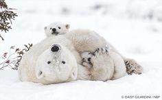 Wapusk National Park, Canada © Daisy Gilardini / NBP