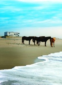 Assateague Island National Seashore...my aunt and uncle live here. Amazing to see the wild horses running!
