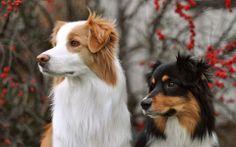 """""""i think we should bark, should we bark?"""" """"okay, but you start."""""""