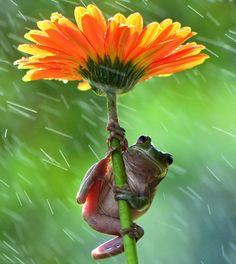 Ces animaux sont très malins lorsqu'il s'agit de s'abriter de la pluie. Ils prennent ce qu'ils ont a disposition dans la nature pour en faire des parapluies de fortune. Très ingénieux ces animaux ! #nature #animaux #pluie