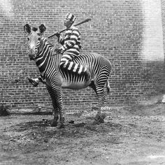 Zebra Cebra prison lines black&white black white Humor Vintage, Funny Vintage Photos, Photo Vintage, Vintage Photographs, Vintage Retro, Weird Vintage, Vintage Black, Vintage Items, Black White Photos