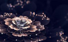 digital Art, CGI, Fractal Flowers, Fractal HD Wallpaper Desktop Background