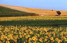 Lugares mais lindos do mundo: Toscana, Itália