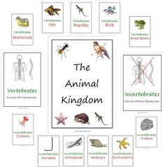 Our Worldwide Classroom: Our Animal Kingdom Notebooks With Printable Materials