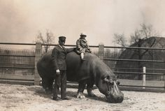 Early 1900s  A zookeeper and a young visitor with a hippopotamus at the St. Louis Zoo in the early 20th century.