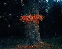 Thomas Jackson s'inspire d'amas organiques pour créer sa série Swarms. Partant du désordre apparent (mais judicieusement organisé) des fourmilières, bancs de poissons et voiliers d'oiseaux, etc., il retranscrit l'idée d'une multitude animale avec des objets évoquant une toute autre réalité : gobelets,  branches, pelotes de laine. Entre nature et manufacture, le photographe produit une série de sculptures inusitées.
