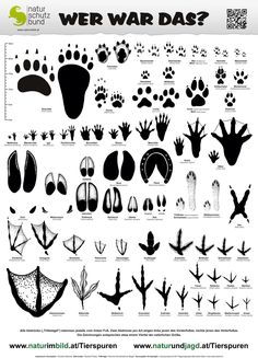 Tread seal determination sheet, foot seal of 60 domestic wild and farm animals . Farm Animals, Animals And Pets, Animal Tracks, Environmental Education, Camping And Hiking, Outdoor Survival, Science And Nature, Survival Skills, Crafts For Kids