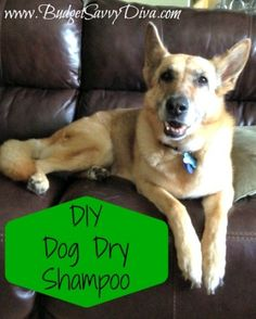 DIY Dog Dry Shampoo. Trying this on my dog:)