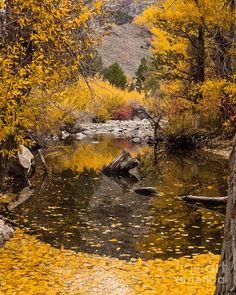 ✯ Aspen Leaves on Stream