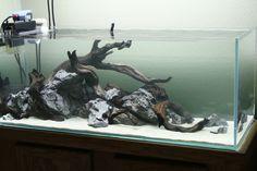 hardscape aquarium - Google Search