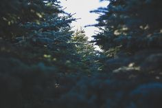 earth, carbon footprint, holidays, holiday waste, waste management holiday, waste management holidays, holiday recycling, environmental holidays, holiday, holiidays