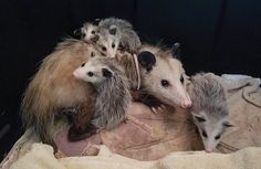 AFC Cooperative Farming News - Wild Mammal Care of Alabama