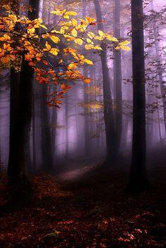 ~Lori: Misty forest…..by Kristjan Rems