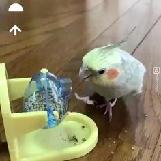 Funny Birds, Cute Birds, Cute Funny Animals, Cute Baby Animals, Animals And Pets, Cute Cats, Pretty Birds, Wild Animals, Cute Animal Videos