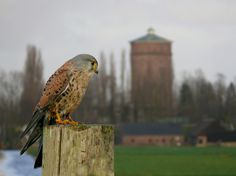 panden 6621 - Foto door Peter de Mooij. Gevonden op Gouda Bruist  www.goudabruist.nl