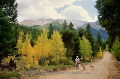san isabel national forest in the fall | ... dogs, San Isabel National Forest, Colorado | Allen Russell Photography