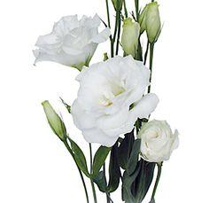 Google Image Result for http://www.wholeblossoms.com/images/Lisianthus-flowers.jpg