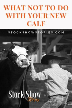 Be prepared, avoid mistakes with your or FFA Beef project. Show Cattle Showing Cattle, Showing Livestock, Show Cattle Barn, Cow Tipping, Show Cows, Show Steers, Beef Cattle, New Environment, Family Show