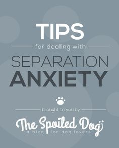Tips for Dealing with Separation Anxiety in Dogs. Exact same tips our trainer taught us for our puppy. Just skip down to the tips.