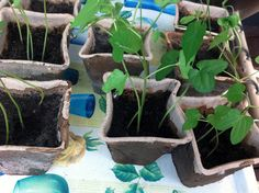 Taimien kasvatusta
