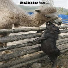 Funny animal pictures with 21 more pics like wren doing the splits. Some funny animal pictures with captions. Couples Impairs, Beautiful Creatures, Animals Beautiful, Cute Baby Animals, Funny Animals, Wild Animals, Leaf Animals, Unlikely Animal Friends, Unusual Animal Friendships