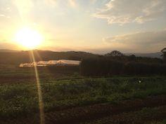Fazenda Santa Adelaide Orgânicos - Itatiba, São Paulo