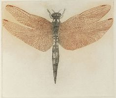 """Dragonfly"" (etching) from: Diptera: A Book of Flies & Other Insects (1983)  – Leonard Baskin (1922–2000)"