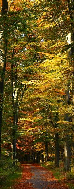 Fall glory in Oosterbeek, Netherlands • photo: andrek65 on Flickr