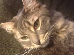 My beautiful cat Ruthie