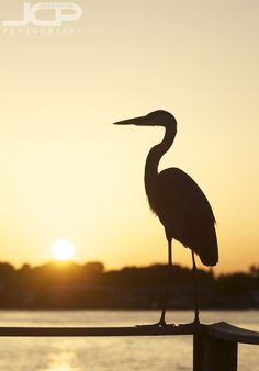 Blog - Jason Collin Photography - Commercial Car Event DSLR Lessons for St Petersburg Tampa & Wesley Chapel - Call 813-240-5357 Silhouette Blog, Animal Silhouette, Grey Heron, Big Bird, Sea Birds, Woodburning, Nature Photos, Letterpress, Louisiana