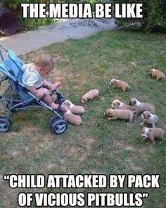 Child attacked by Pit Bulls....brought to you by your trusted, friendly media (formerly gossipy high schoolers) channels of America.