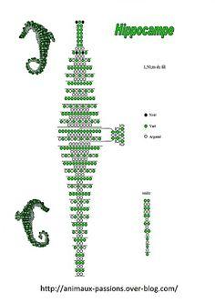hippocampe-1.jpg
