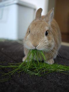 bunnies love grass