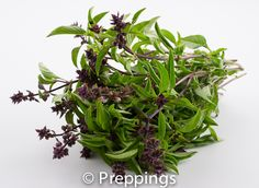 Thai Basil Blossom / Micro Thai Basil / Thai Basil Flower :: Search by flavors, find similar varieties and discover new uses for ingredients @ preppings.com