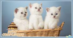 cartoline-compleanno-con-gatti-5